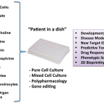 """Summary of the many biomedical opportunities enabled by the iPSC technology (""""patient in a dish""""). For instance, after generating specific neuronal subtypes representative of various neurotransmitter systems (e.g. glutamatergic, GABAergic, dopaminergic), these cells can be investigated as pure and mixed cultures and subjected to various manipulations (e.g. polypharmacology) for new target identification (ID), predictive toxicology, and other purposes."""